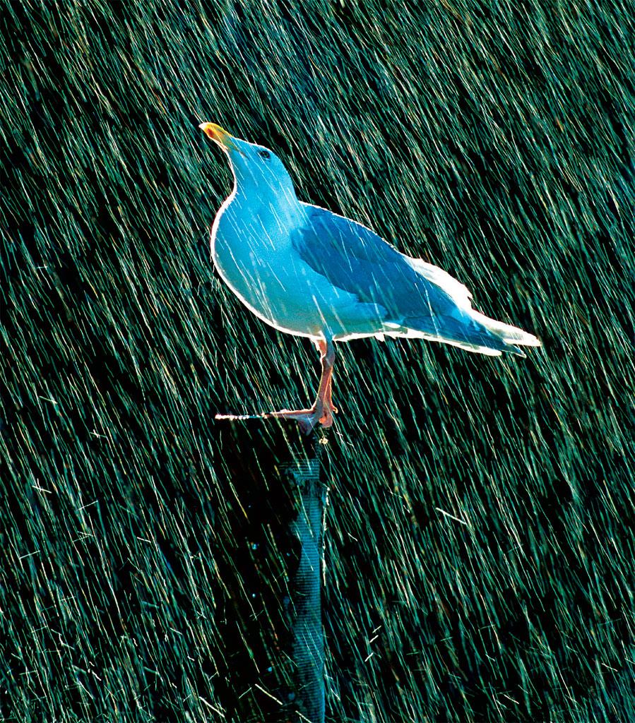 02-o-poder-da-chuva