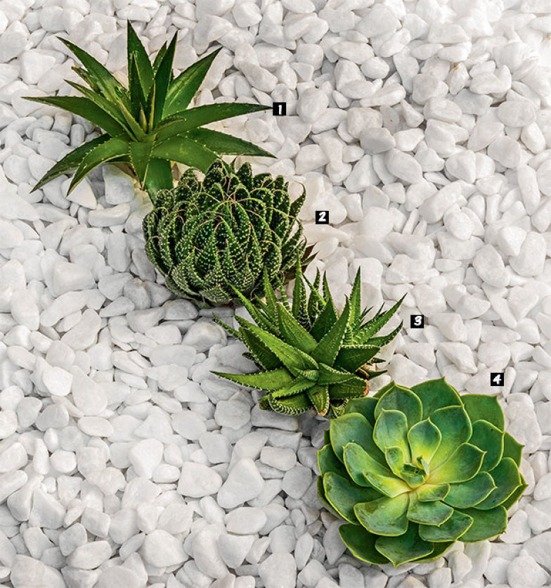 02-jardinagem-facil-cactos-suculentas-agaves