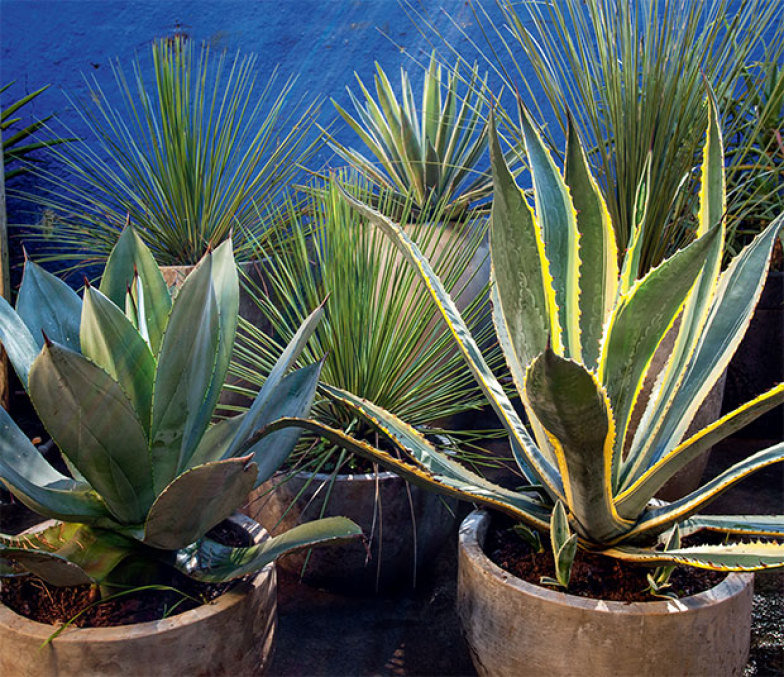 03-jardinagem-facil-cactos-suculentas-agaves