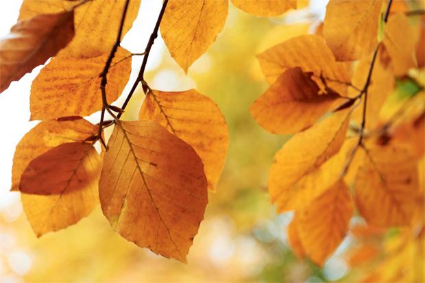 03-primavera-verao-outono-e-inverno