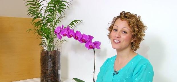flash-plantas-no-quarto
