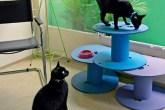gatos-playground-carretel-fio