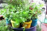 jardim estar