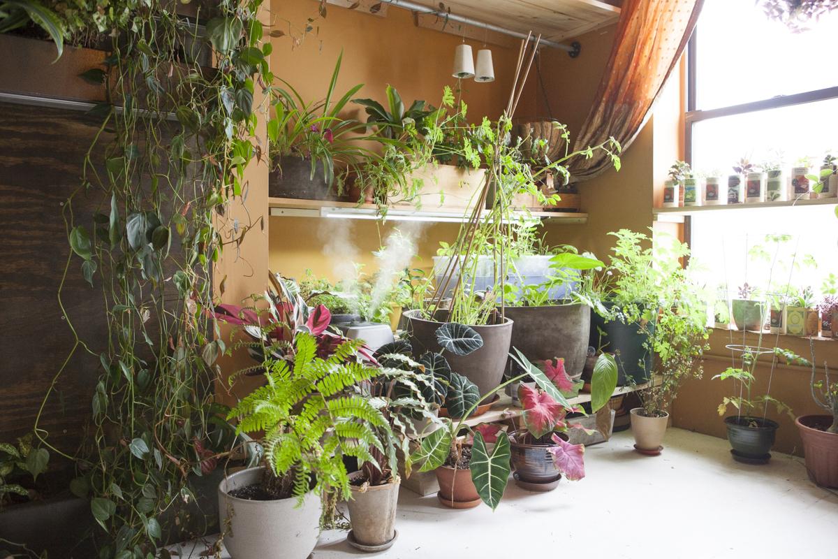 quarto-laranja-parede-verde-com-madeira-e-diversos-vasos