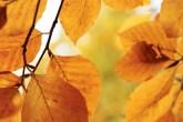 primavera-verao-outono-e-inverno