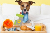 abre-exame-hoteis-pets-linkout