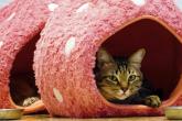 hotel para gatos na Malásia