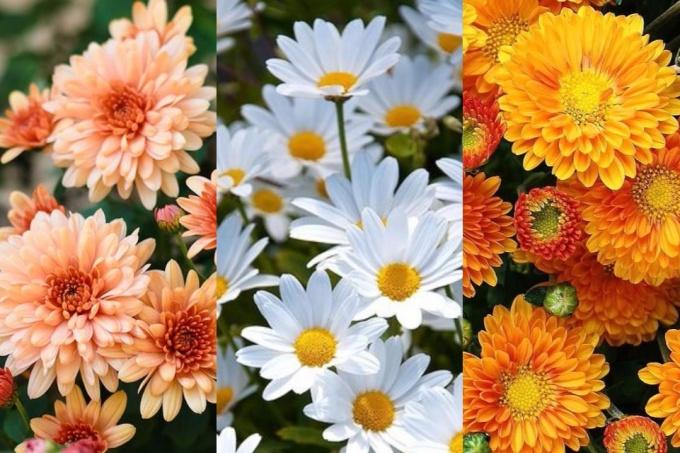 Saiba o que sua flor de aniversário diz sobre sua personalidade | CASA.COM.BR