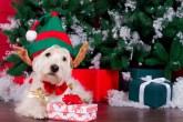 presentes de Natal para o seu bichinho de estimação