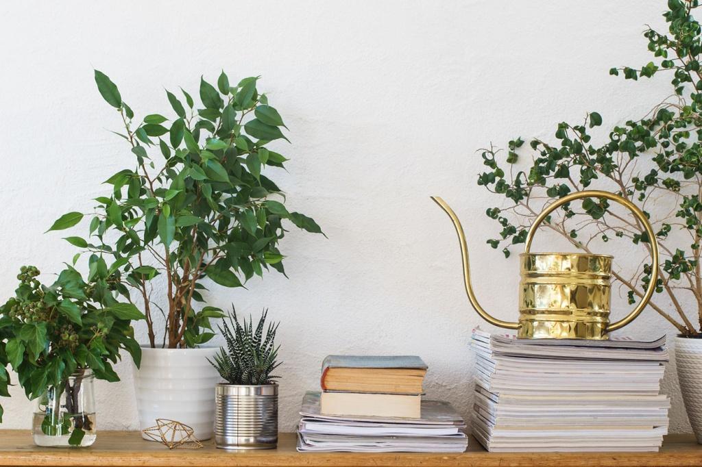 plantas para ambientes pouco iluminados