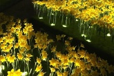 garden of light narcisos