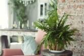 planta ideal para cada cômodo da casa