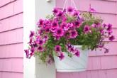 flores em cestas