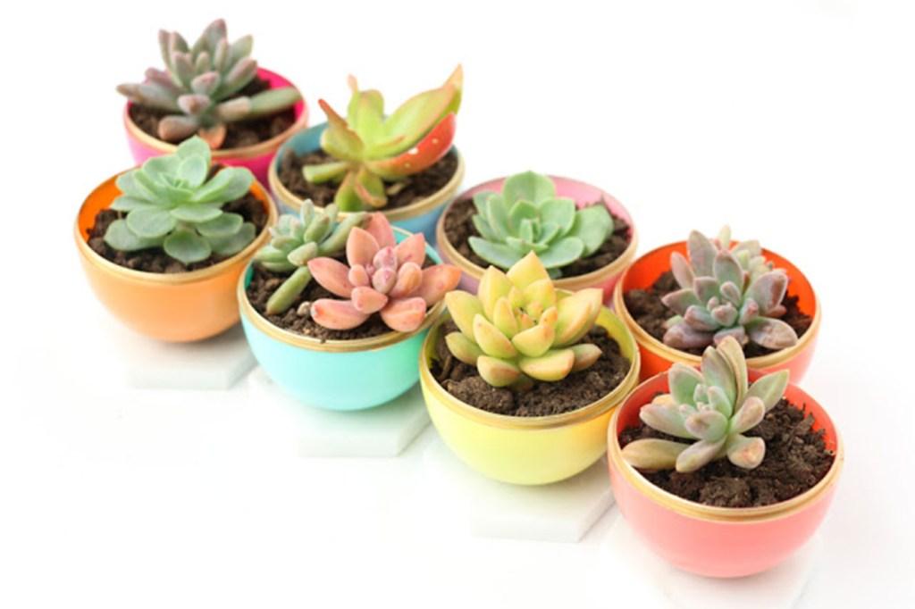 DIY para plantas