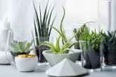 como manter as plantas vivas