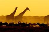 namíbia lua de mel meghan markle e harry