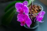 cubo de gelo vaso de flor