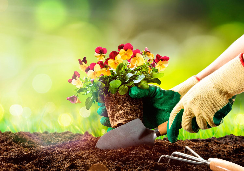 muda de flores vermelhas e amarelas sendo plantada