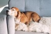 deixar a casa limpa se você tem animais de estimação