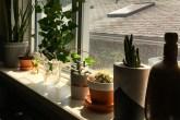soleira da janela