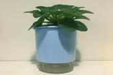 vaso de plantas autoirrigável azul