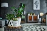 segredos de quem ama plantas