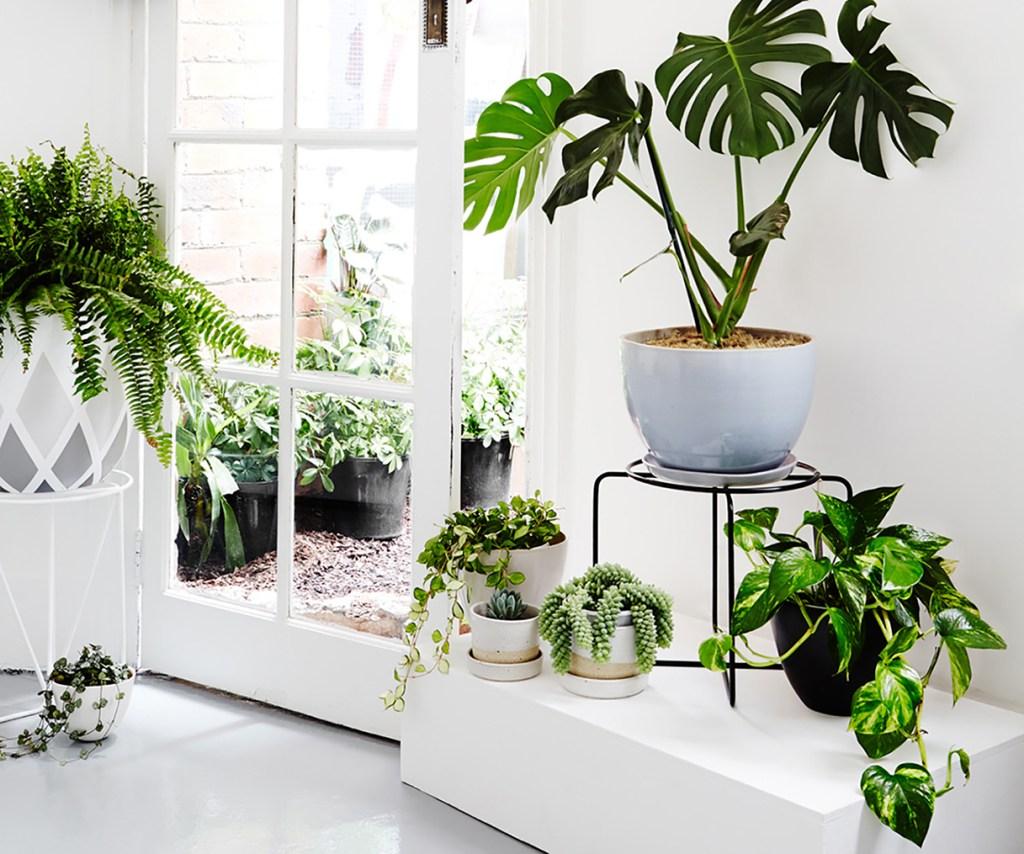 plantas em vasos