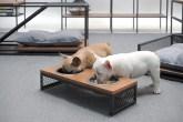 Dois cachorros comendo em um comedouro estilo industrial