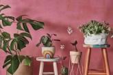 dicas-para-ter-plantas-em-casa- Foto Klacius Ank + Laura Izidoro