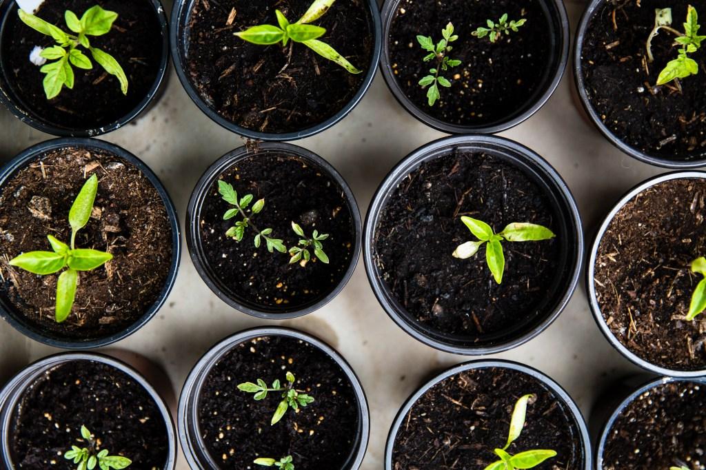 Vasos com plantas pequenas vistos de cima