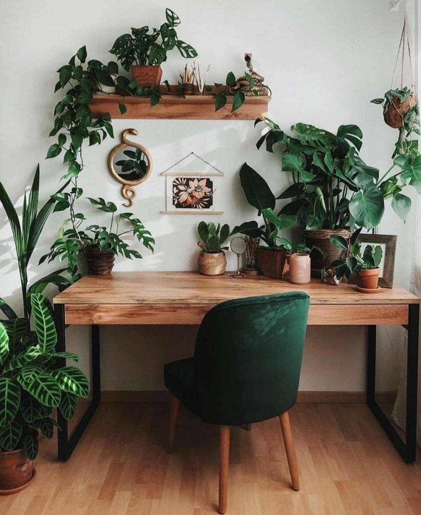 home office com plantas por todos os lados, mesa de madeira e cadeira de veludo verde