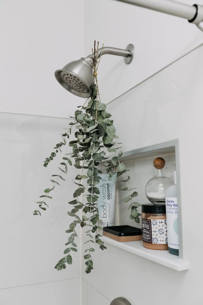 eucalipto amarrado no chuveiro