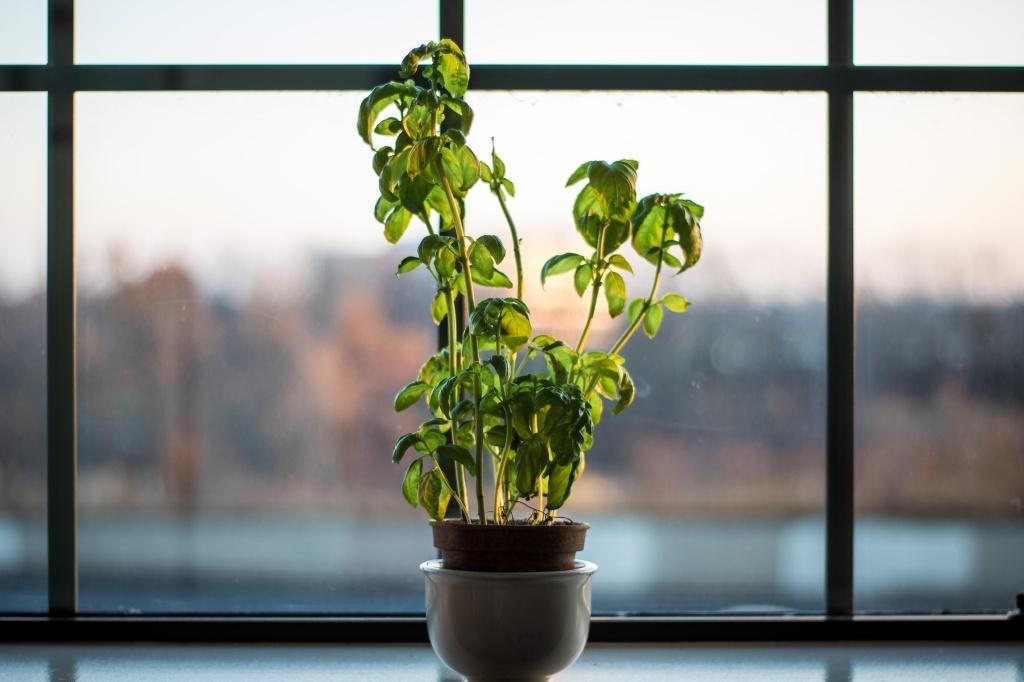 Planta em vaso marrom em frente à janela de vidro.