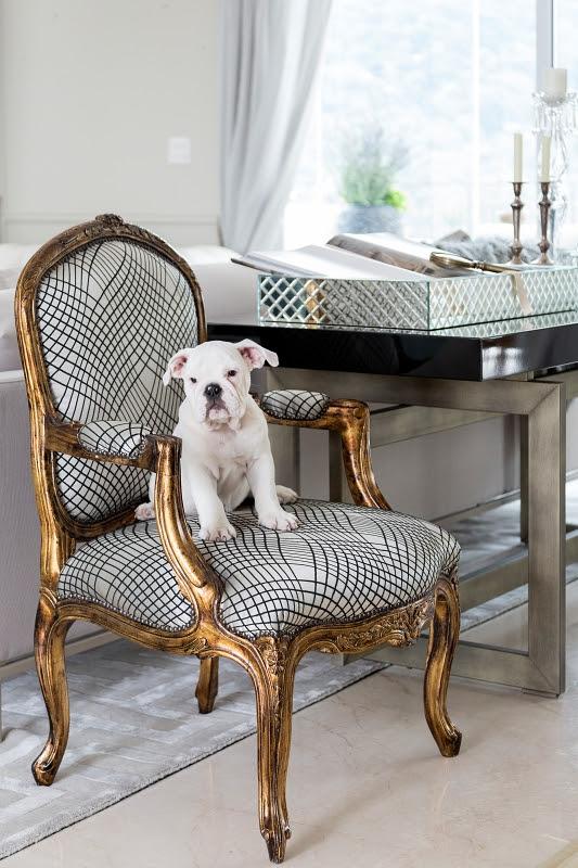Um filhote de cachorro branco sentado em uma cadeira com design clássico. O estofado é branco com listras preta e a estrutura é dourada.