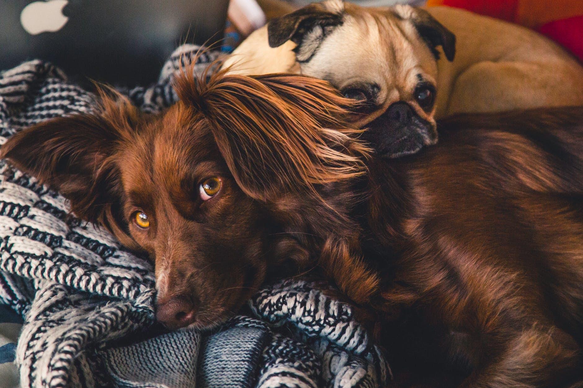 8 dicas essenciais para adaptar a decoração da casa aos pets
