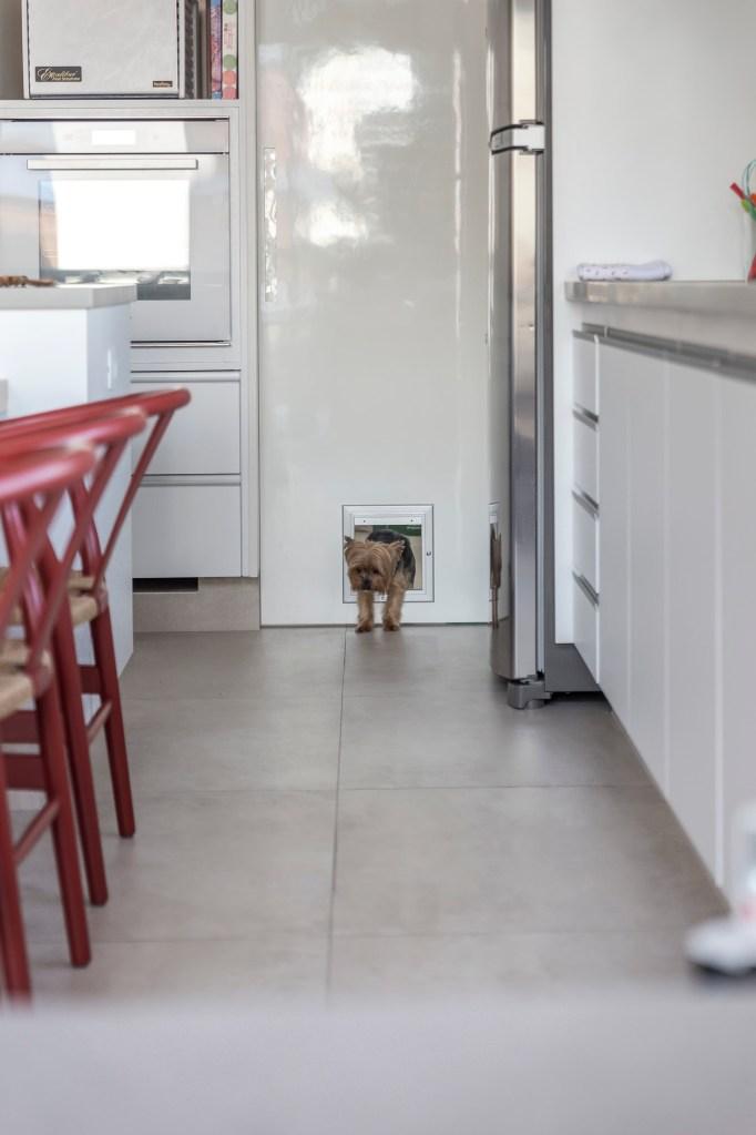 Porta branca da cozinha, com uma portinha quadrada, com um cachorro (yorkshire) passando por ela.
