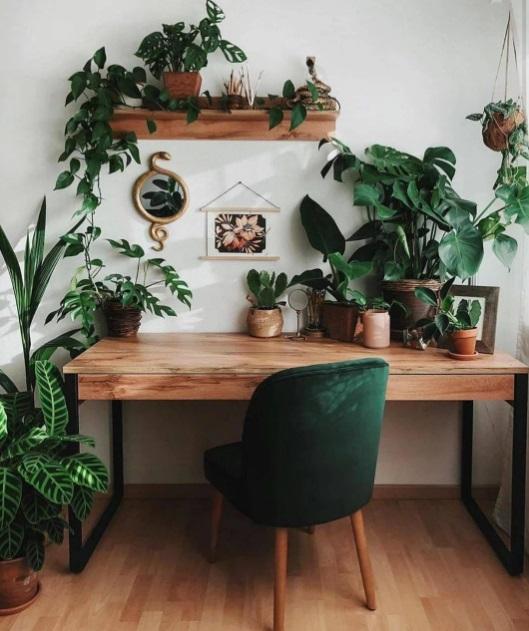Home office com mesa em madeira e cadeira de veludo verde escuro. Plantas na mesa, ao lado e na prateleira de madeira acima