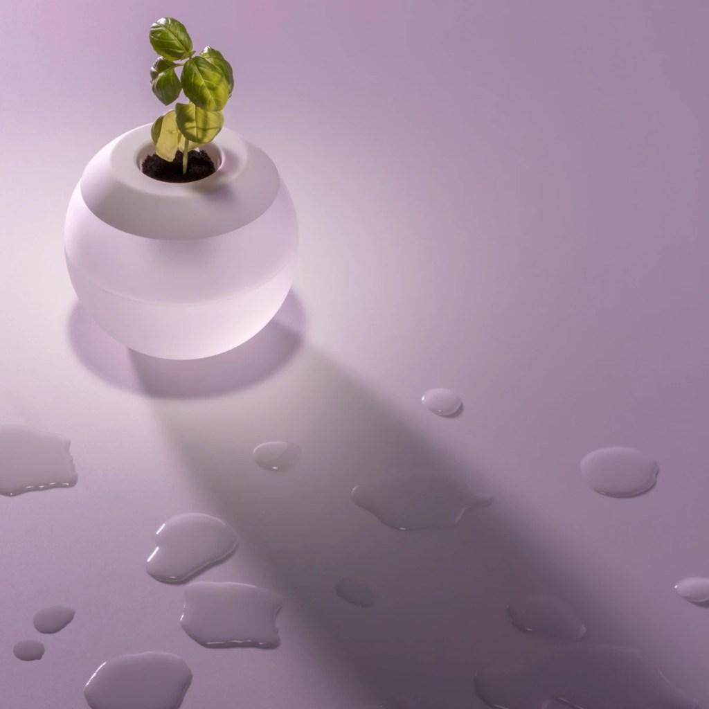 É possível cultivar plantinhas sem terra?