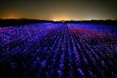 grow-luzes-agricultura-arte-01
