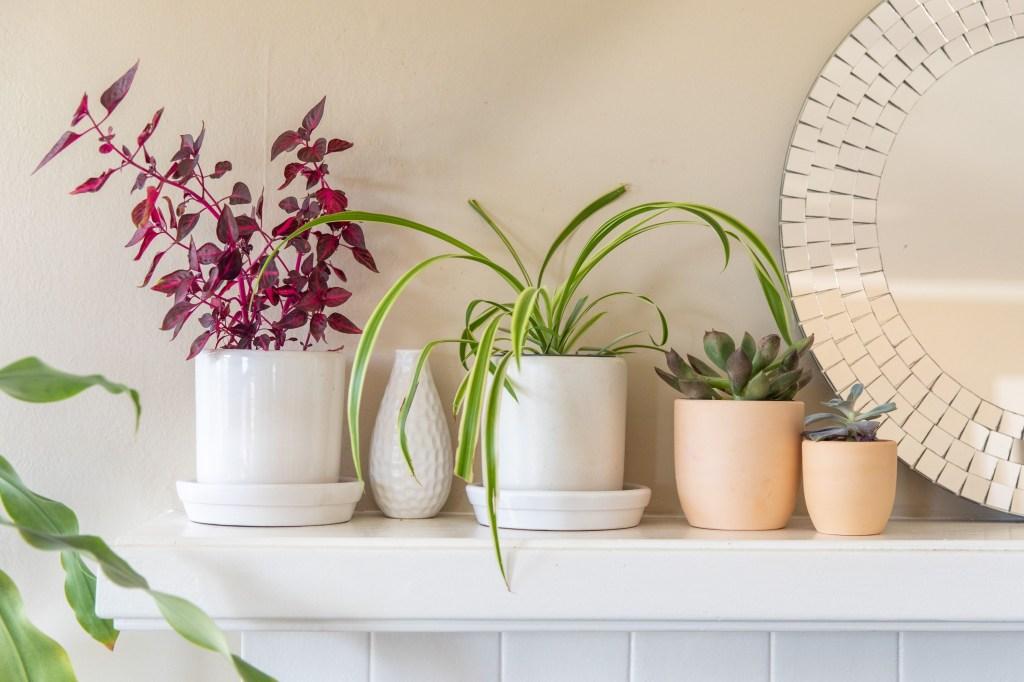 Prateleira branca com cinco vasos pequenos. Um com folhagem rosa, outro verde. Um vazio e duas suculentas