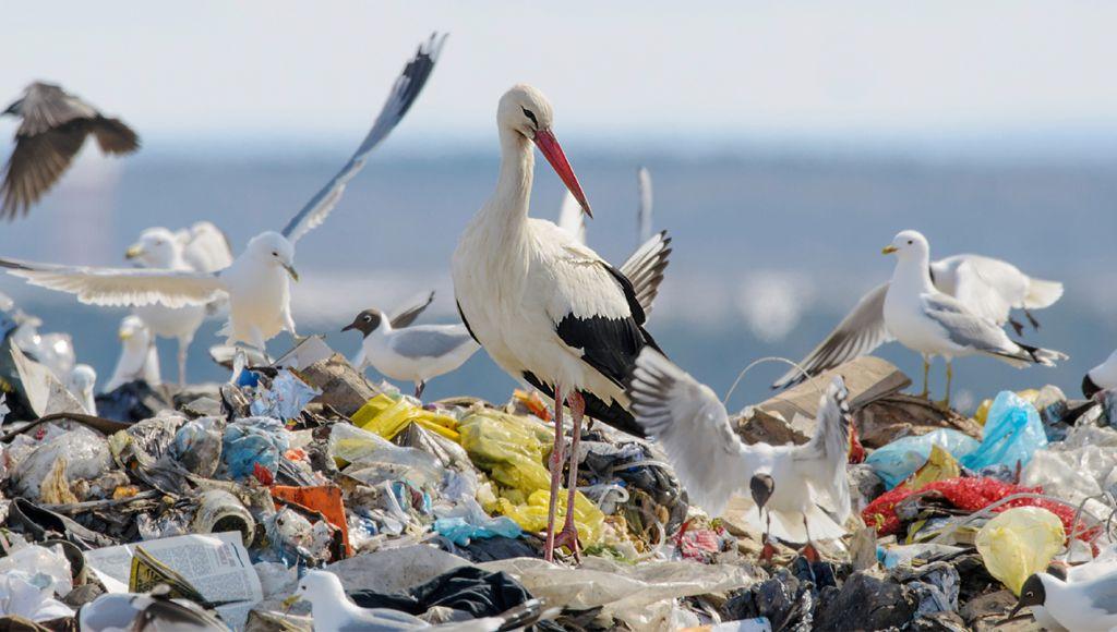 animais com lixo no mar