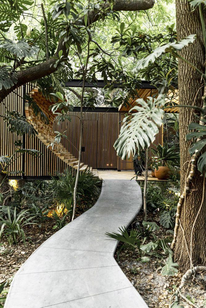 Caminho de concreto no meio do jardim com árvores e costelas de adão. Pátio da casa com madeira ripada ao fundo