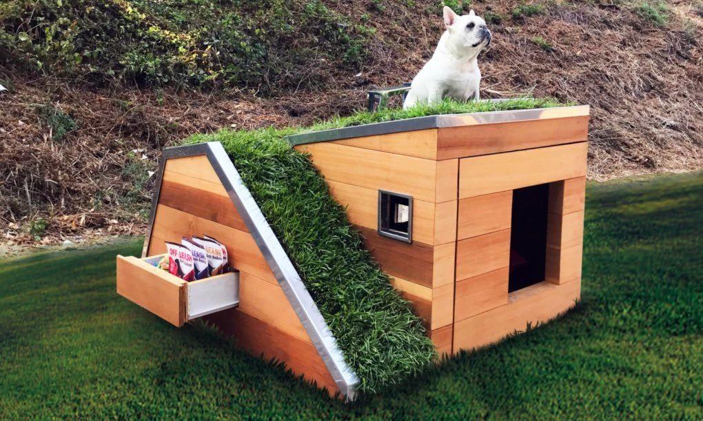 Casinha para cachorro, feita com material sustentável, com telhado verde
