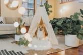 cachorro da raça corgi dentro de uma barraca em formato tenda branca. Plantas ao lado