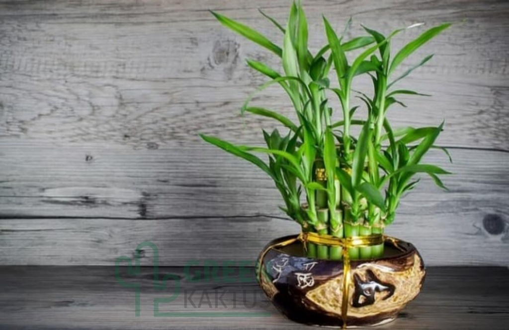 Vaso marrom claro com bambus. Parede em madeira acinzantada