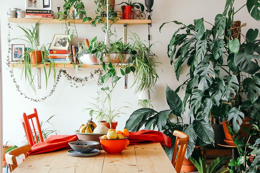 Mesa de madeira com cadeiras vermelhas. Prateleiras com livros, fotos e vasos com folhas pendendo. Do lado direito, costelas de adão e outras folhagens