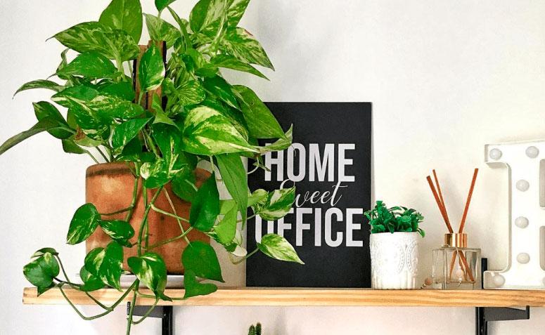 """Prateleira de madeira com vaso com jiboia. Placa preta escrita em branco """"Home sweet office"""". Aromatizador e vaso pequeno de suculentas"""