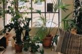 18-arvores-e-plantas-tropicais-que-voce-pode-ter-dentro-de-casa