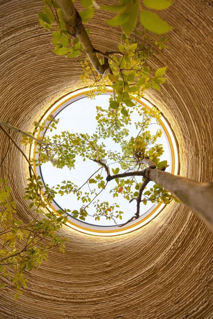Teto interno do habitat. Abertura para entrada de luz. Árvore que se projeta em direção à abertura