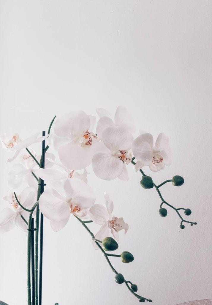 Flores de orquídea branca com detalhe rosa e amarelo no centro